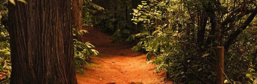 Visita Guiada com Shinrin'yoku – Banho de Floresta – nos Jardins e Mata Velha da Quinta das Lágrimas