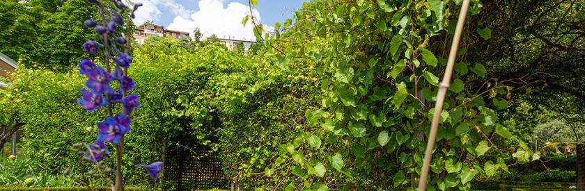 Reabertura dos Jardins da Quinta das Lágrimas Antecipa a Primavera